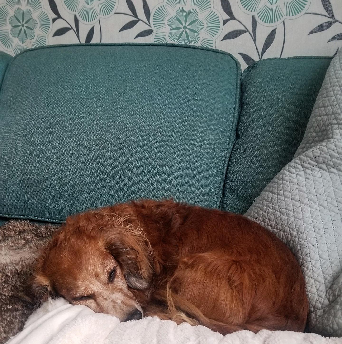 nicole's dog, oliver